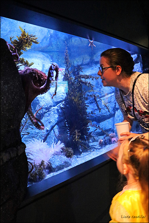 Mommy looking at Octopuses