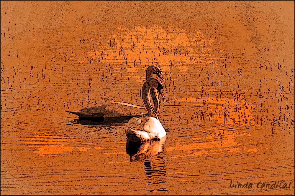 Sunrise at Base Lake Swans