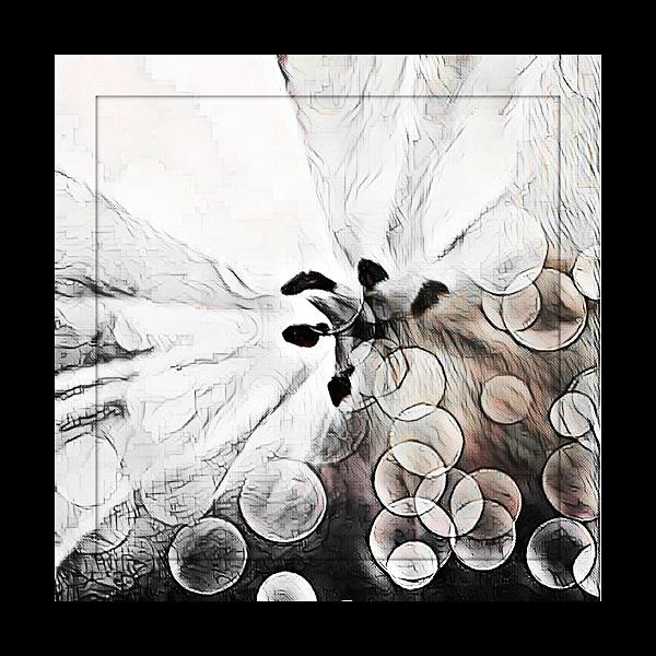 Poppy Photo Art