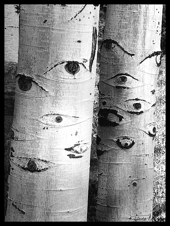 Seeing Eye Tree's
