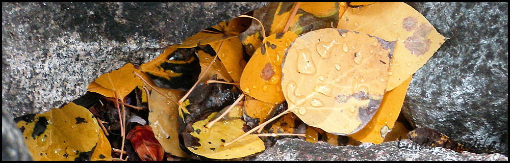 Yosemite Fall Leaves