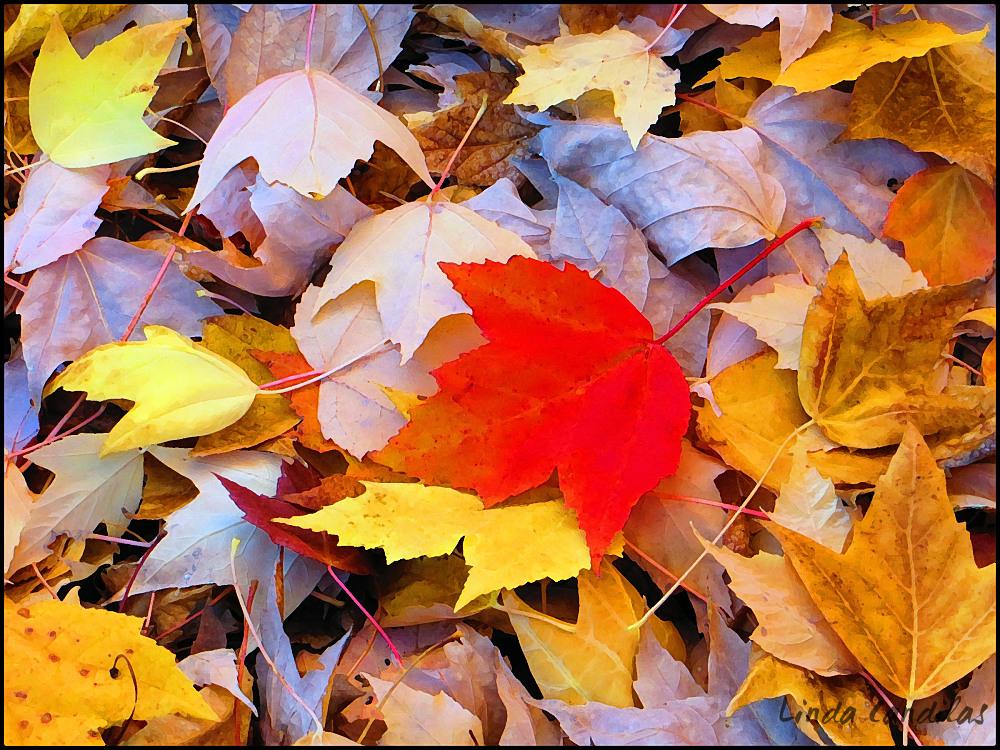 Bright Autume Leaves