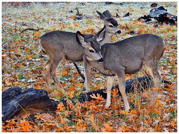 Baby Deer in a Meadow