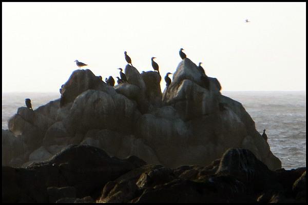Seabirds Nesting