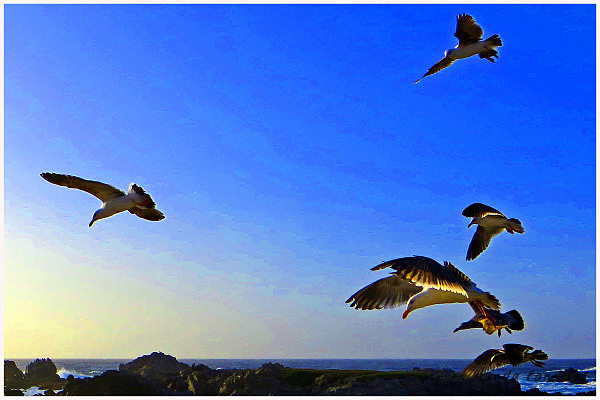 Seagulls Chasing The Wind