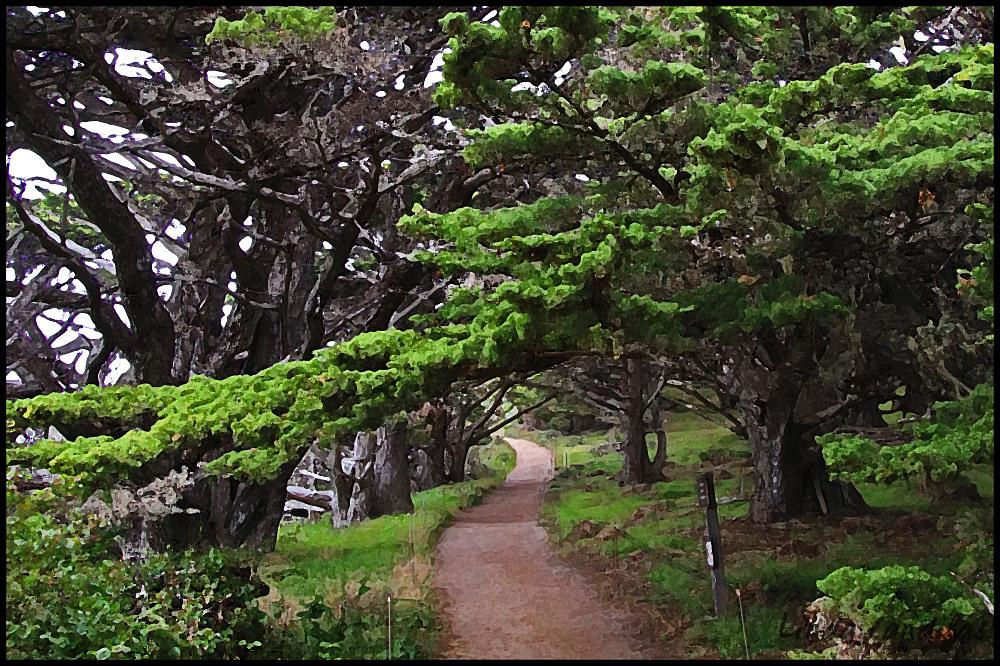 Cypress Tree Trail