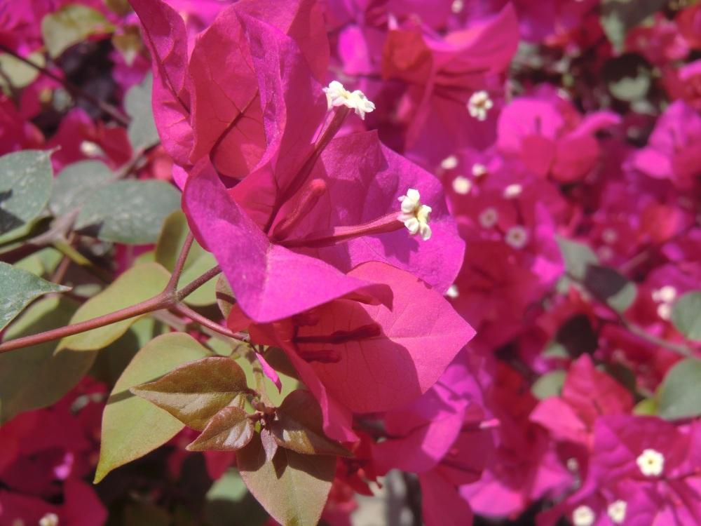 flower & spring