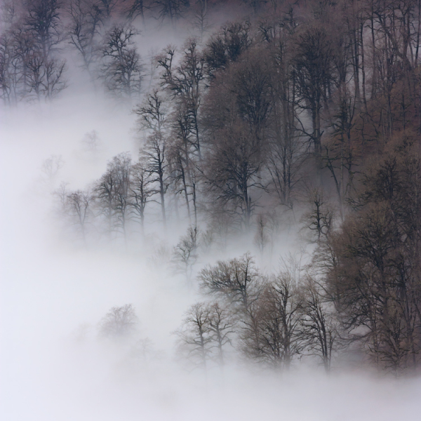 Misty Peace