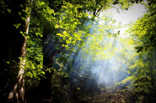 Light of Jungle