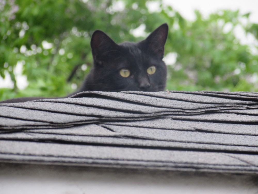 One of my Cats Playing Peek-a-boo