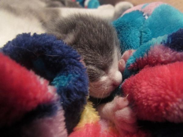 baby kitten asleep