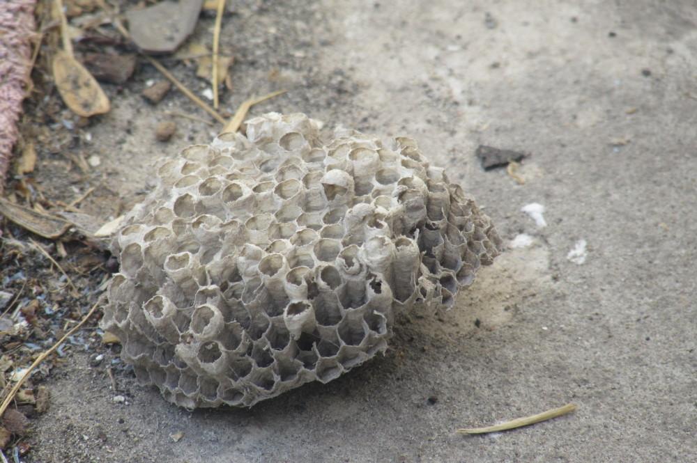 Abandoned bee hive