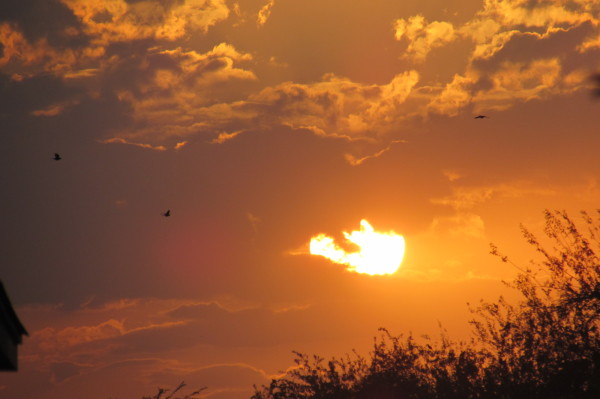 sunset with clouds and birds