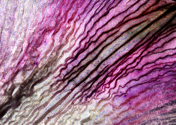 A macro shot of a flower petal