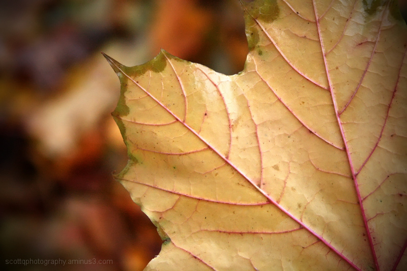 Close up of a yellow leaf