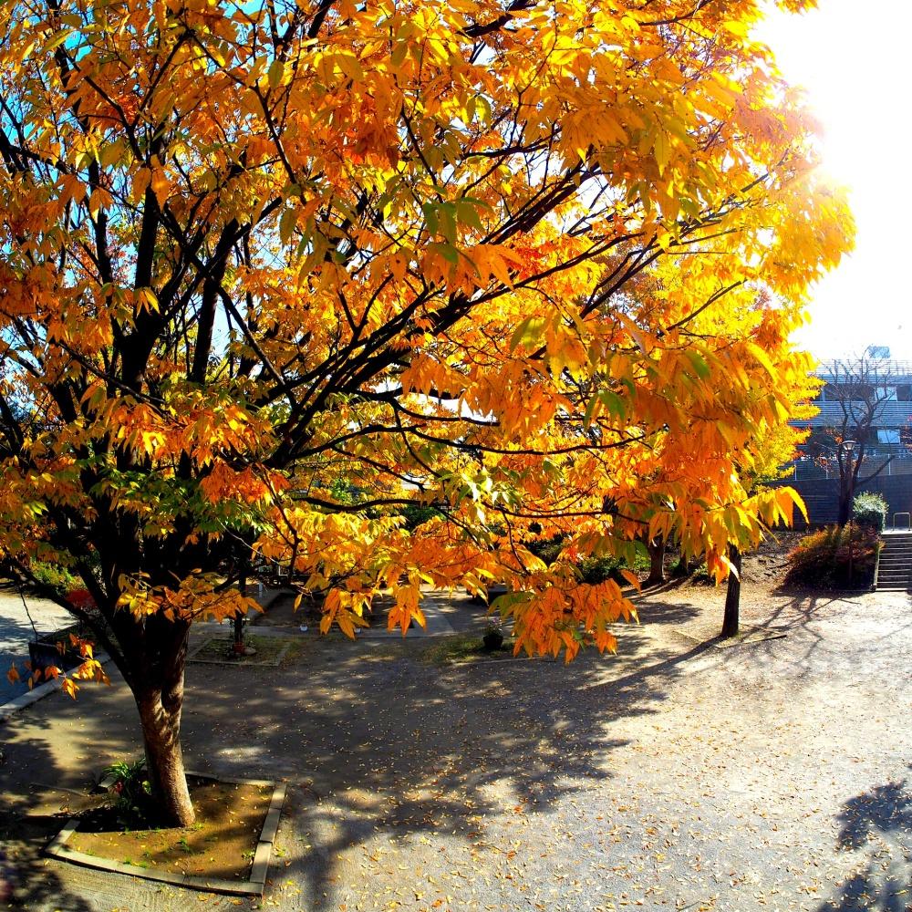 Autumn park,Matsudo