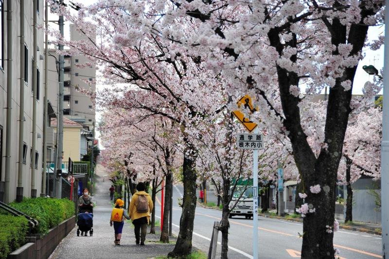 Spring,Chiba japan