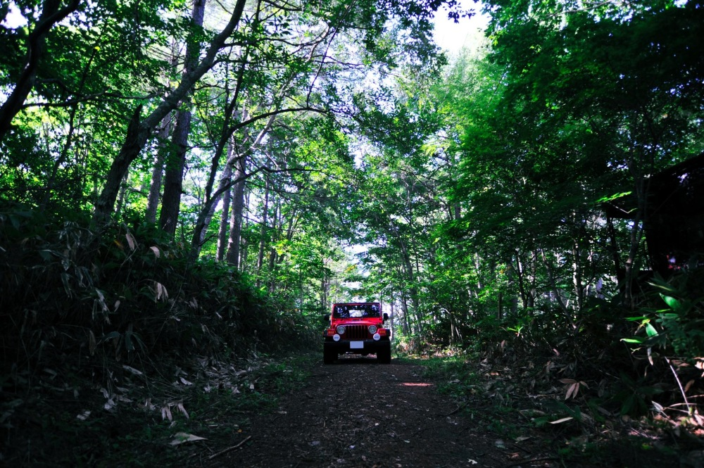 My jeep in the forest