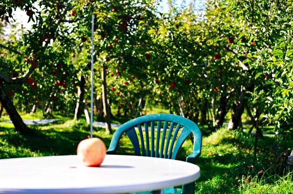 Apple garden,Minakami