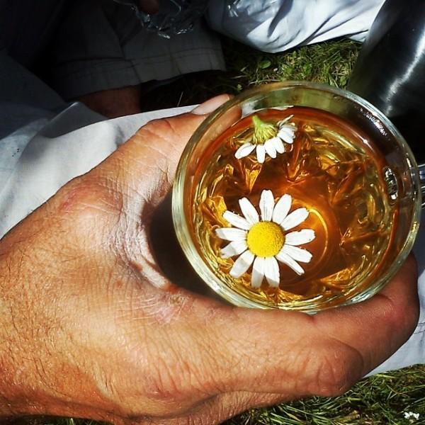 tea, flower, hand