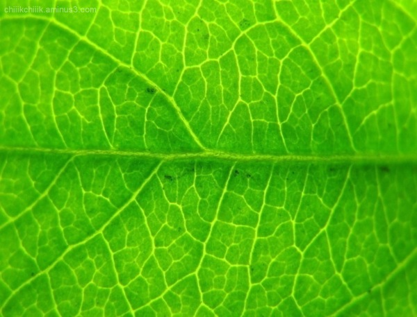 texture green leave