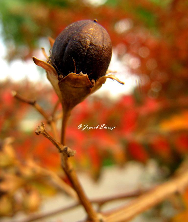Autumnal Glory