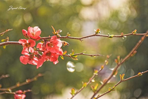 Melody of Spring