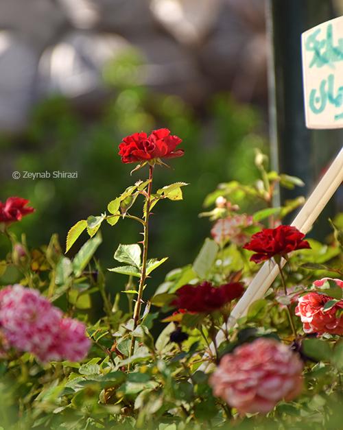 Zeynab Shirazi
