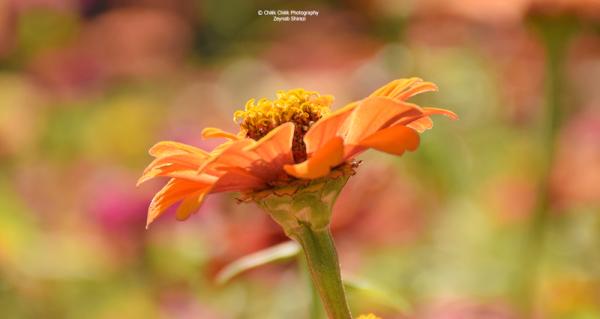 zeynabshirazi, tehran botanical garden
