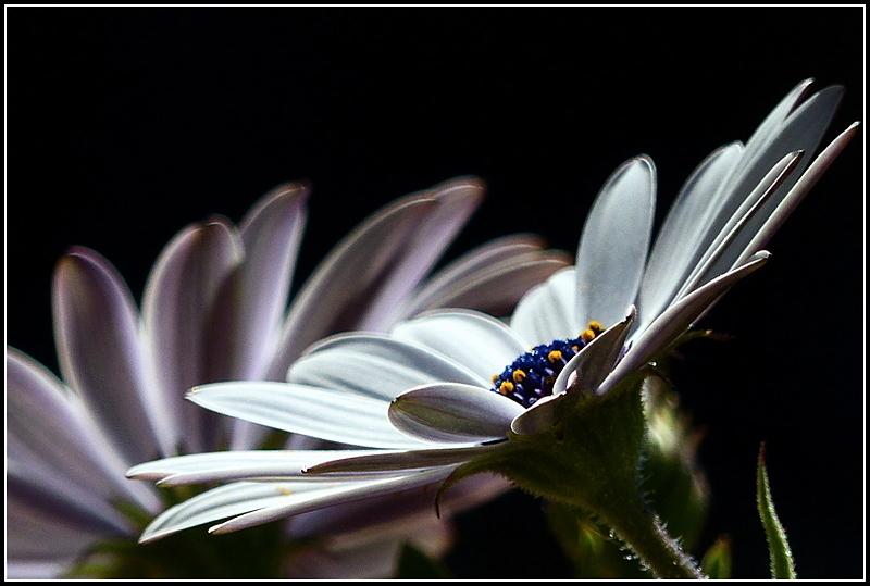 LeTemps des fleurs...