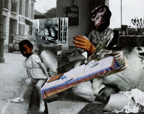 règne des singes