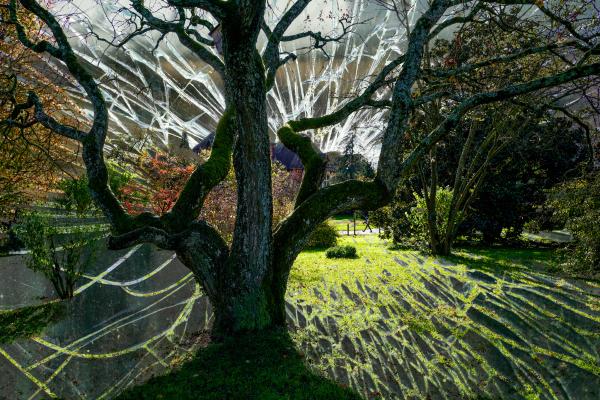 tree double exposure