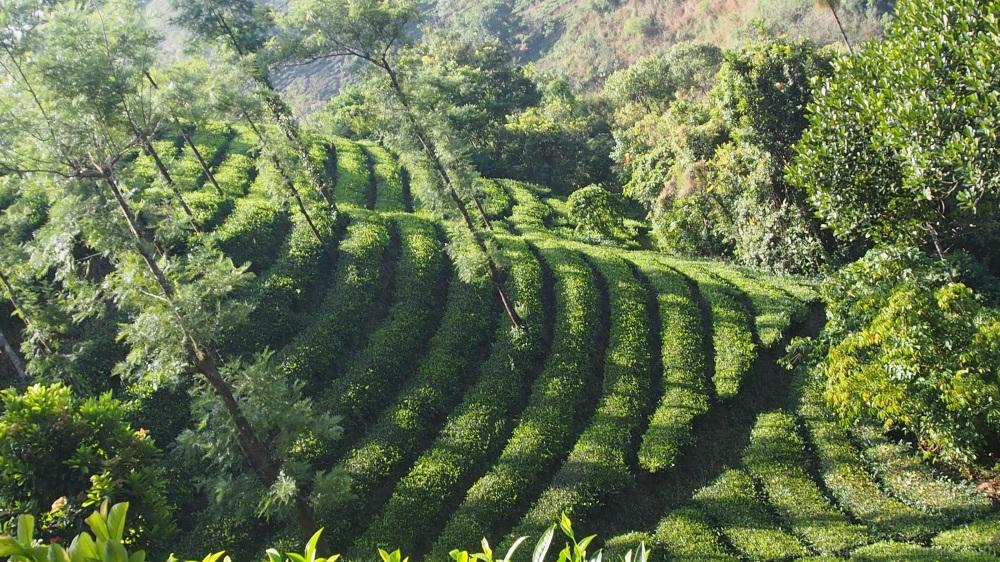 Les Jardins de Thé