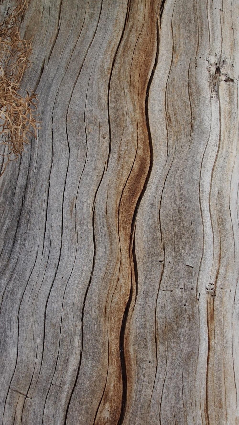 Le vieil arbre
