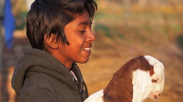 L'enfant à la chèvre