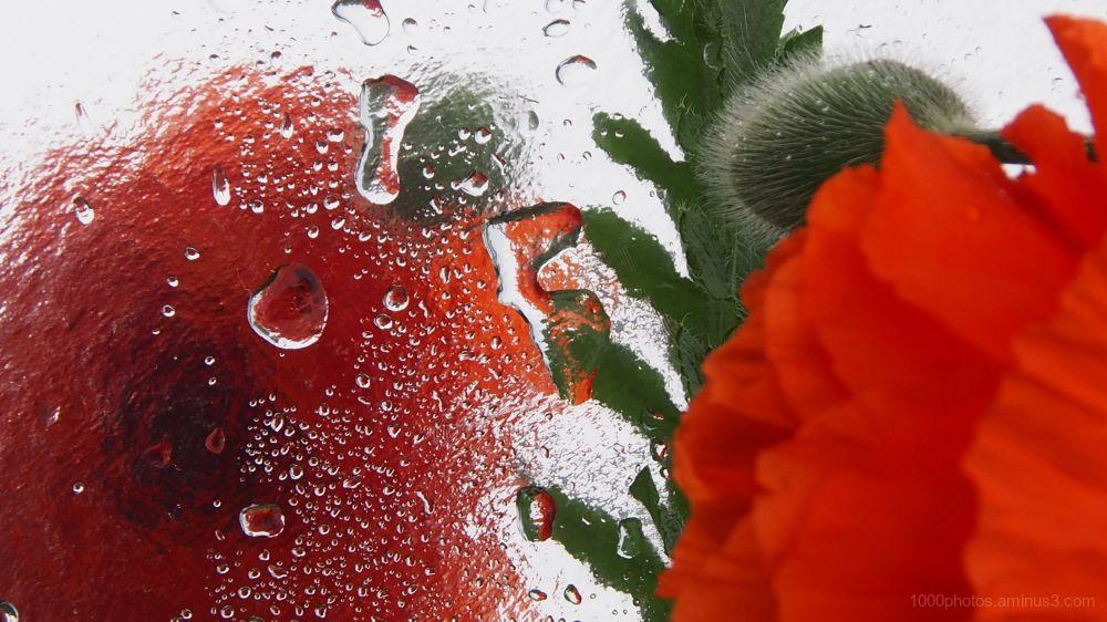 A fleur d'eau 3