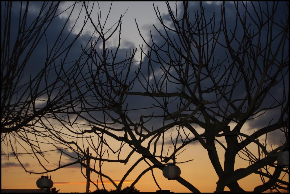 Arbres en hiver au crépuscule