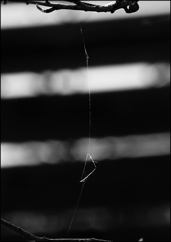 One thread remaining of a spider's web