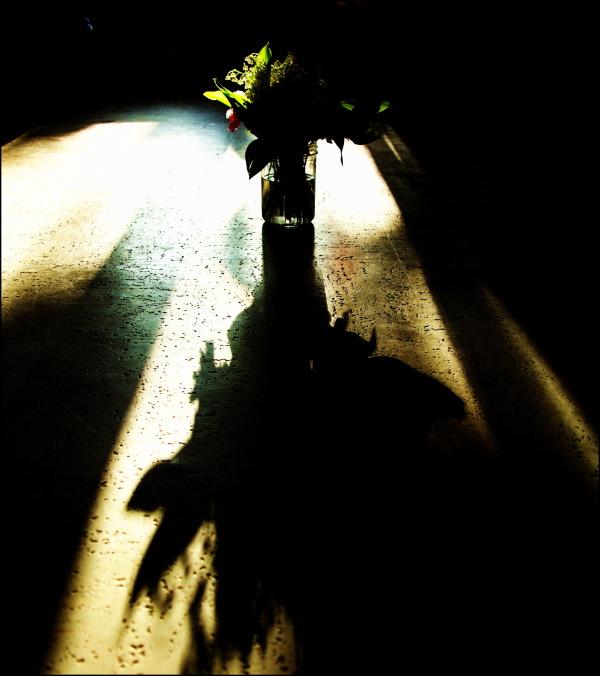 Le côté obscur de la lumière