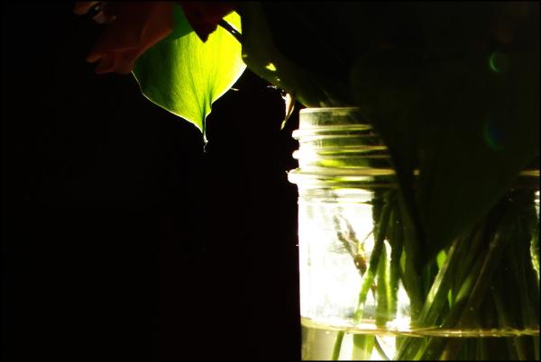 Éclats de lumière dans l'obscurité