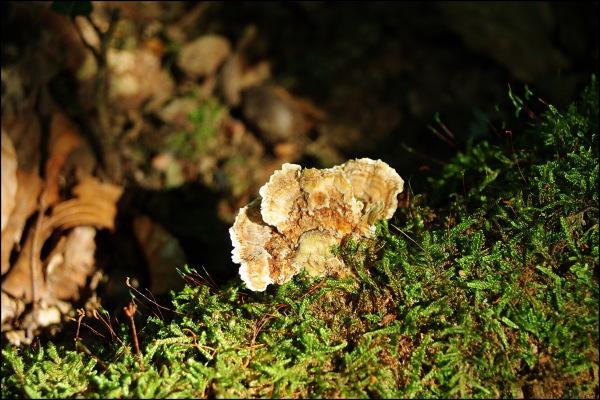 mushroom in august, jura