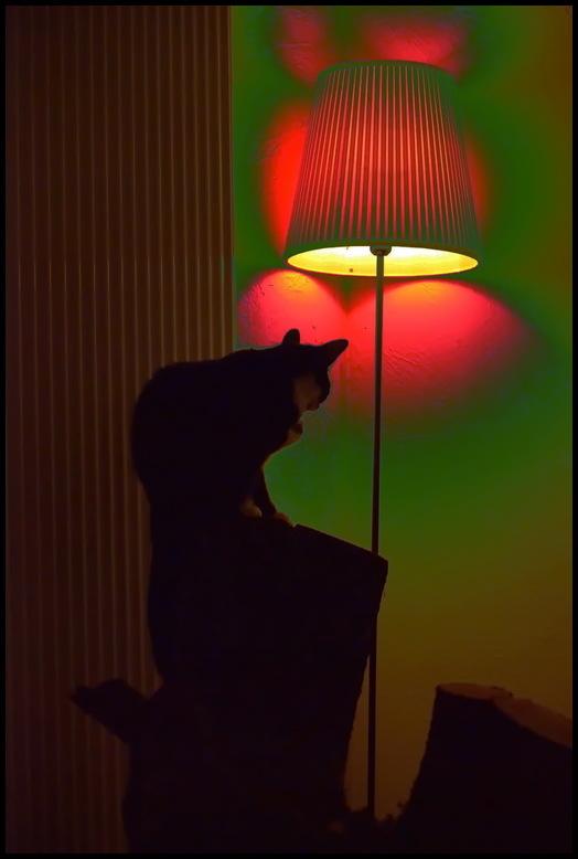 Psycho-kitten, qu'est-ce que c'est ?
