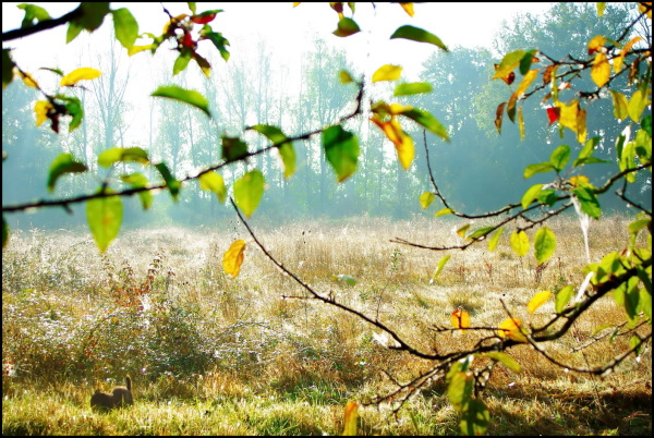 Prairie d'automne