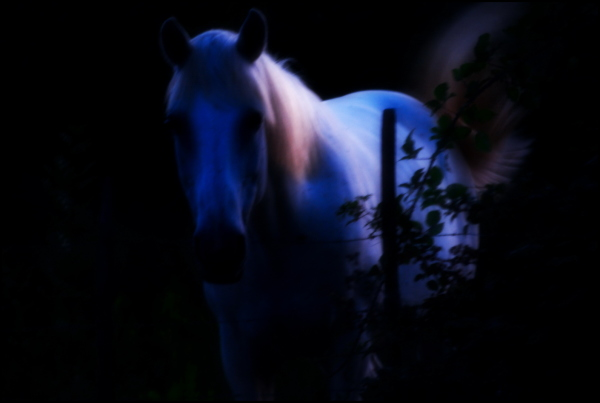 Close encounter of the unicorn kind