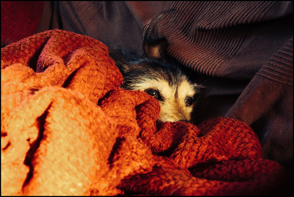 Comfortably lost in le sofa