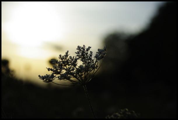 L'aube et le crépuscule