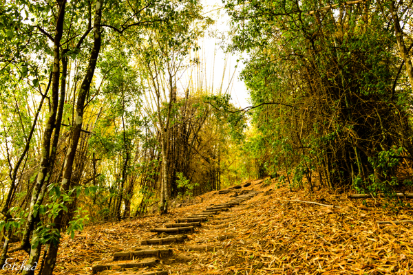 Path to Paradise...