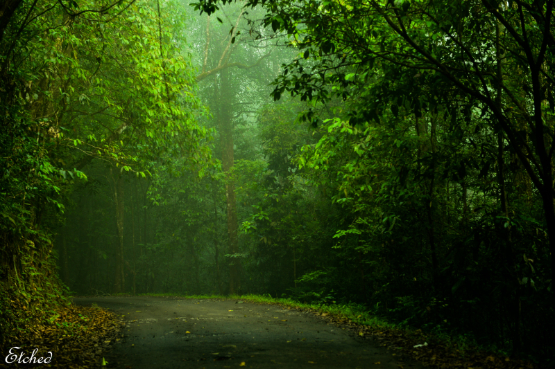 Greetings from Kerela, India