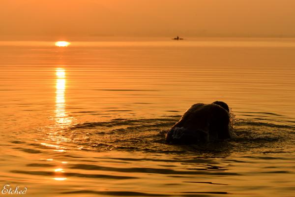 Taking a dip..