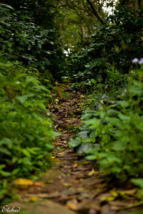 The path less taken..